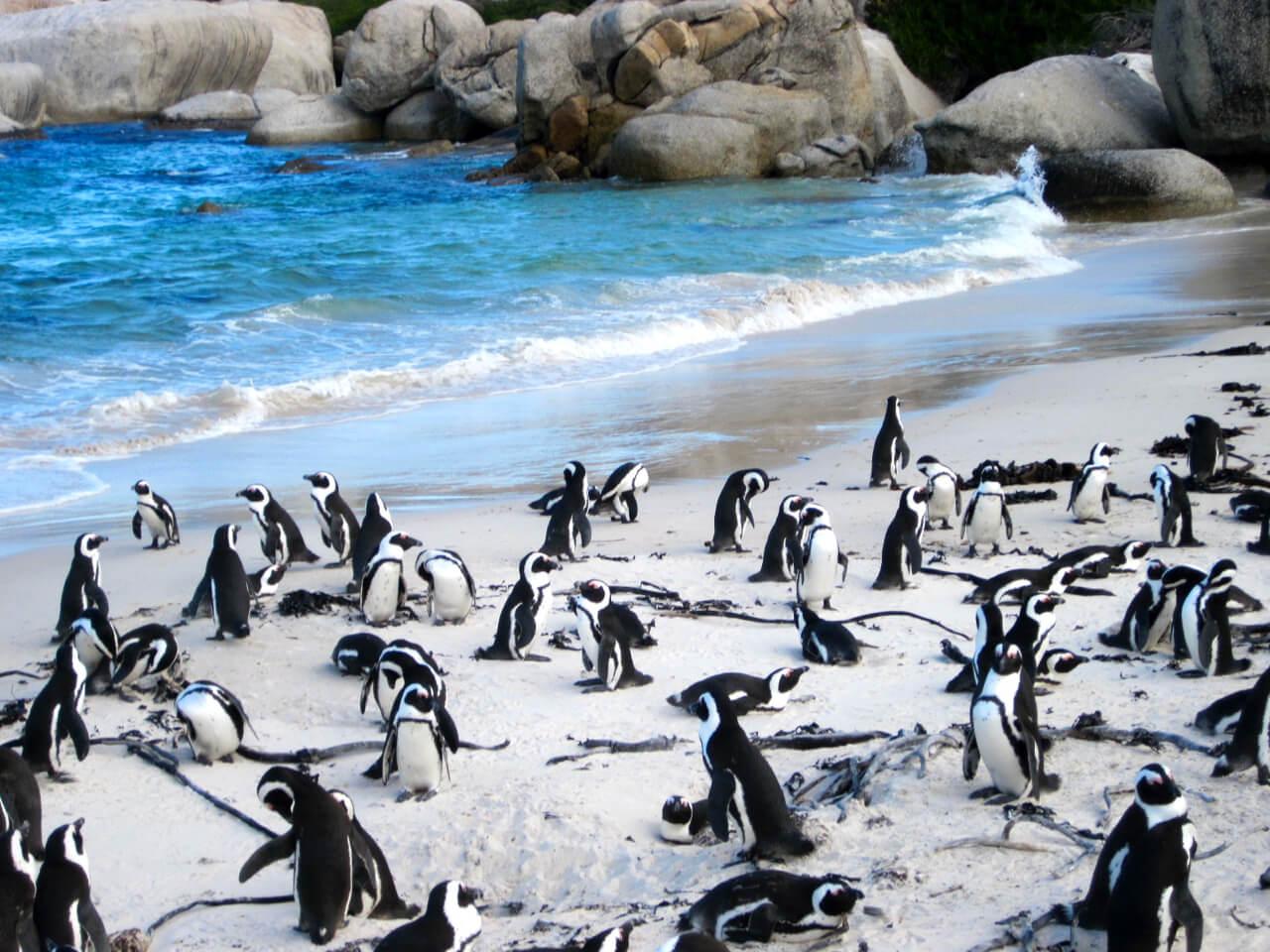 Cape Town - Bush Marine Tours
